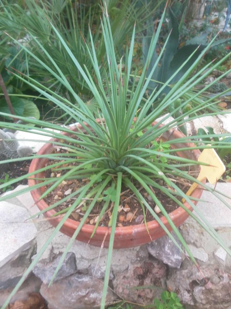 les plantes de syljou - Page 2 Sam_4620