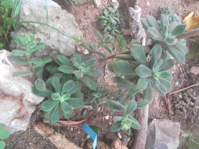 les plantes de syljou - Page 2 Sam_4624