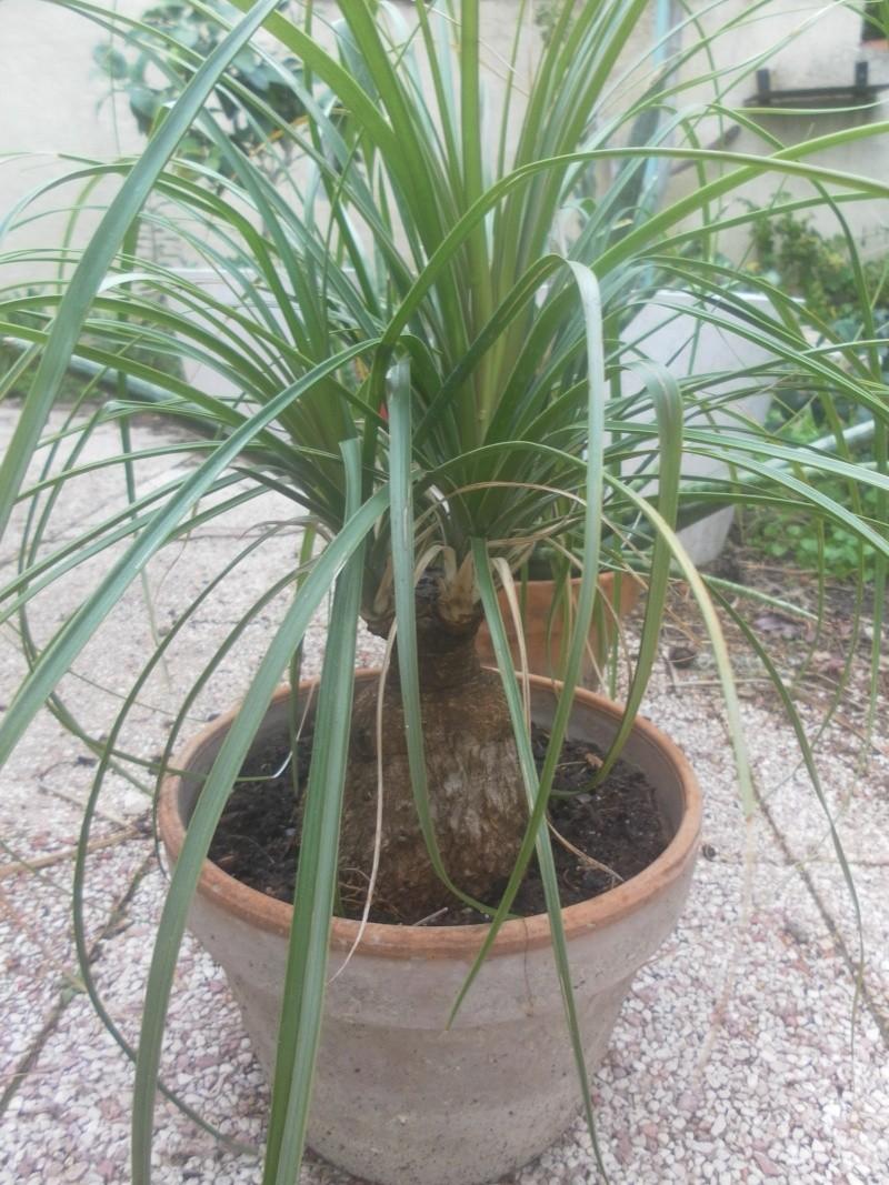 les plantes de syljou - Page 2 Sam_4672