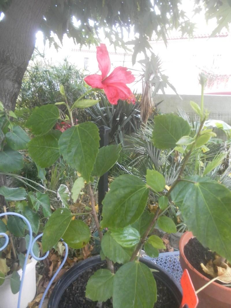 les plantes de syljou - Page 2 Sam_4673
