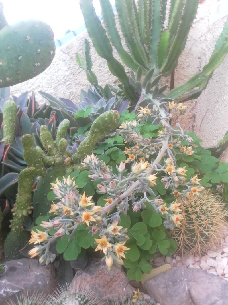 les plantes de syljou - Page 2 Sam_4730