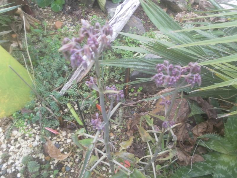 les plantes de syljou - Page 2 Sam_4733