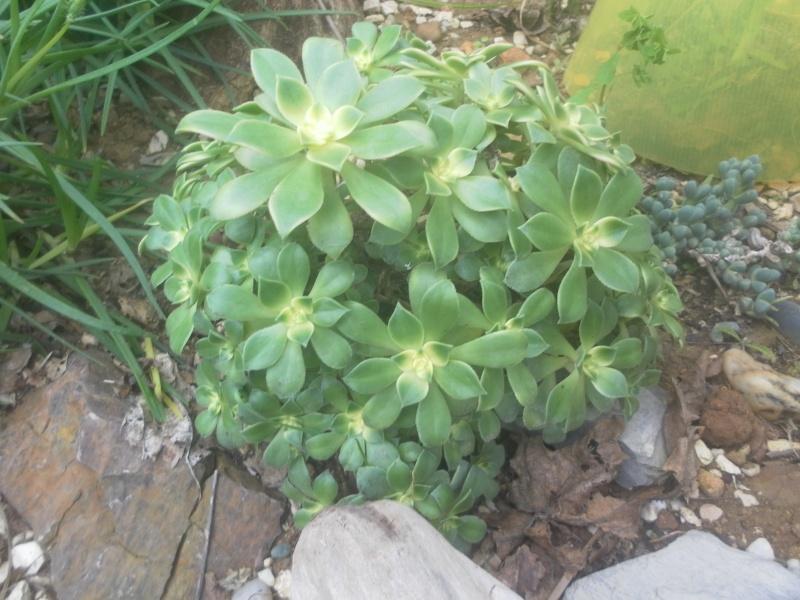 les plantes de syljou - Page 2 Sam_4735