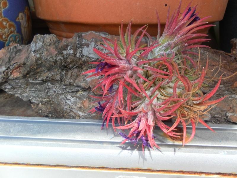 les plantes de syljou Sam_8710