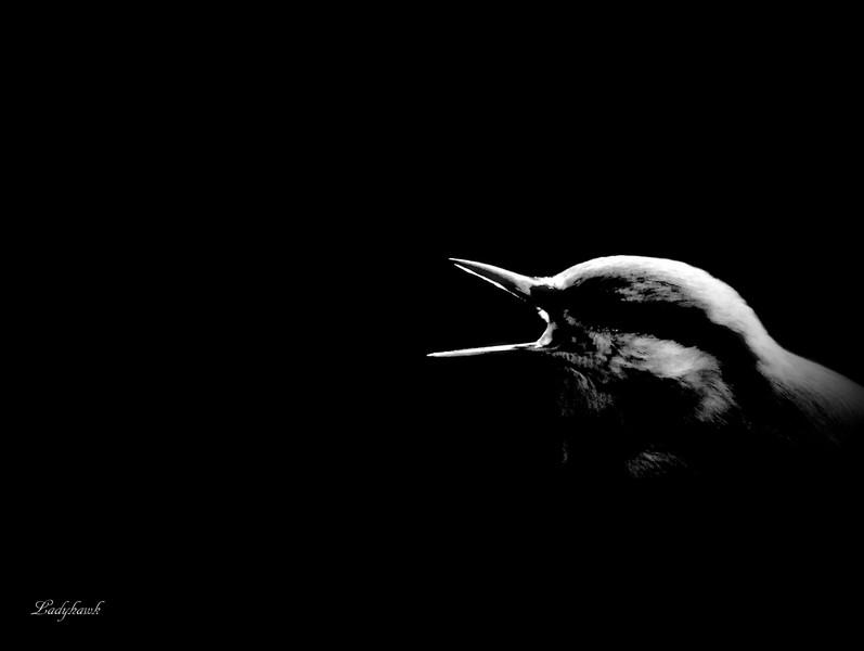 le masque noir Img_8510