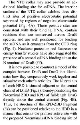 DNA replication of prokaryotes Aasdas10