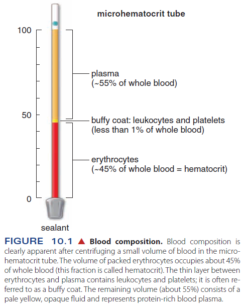 Hematopoiesis. The mystery of blood Cell and vascular Formation Blood_10
