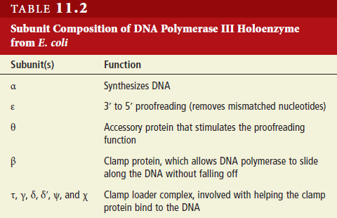 DNA replication of prokaryotes - Page 2 Dna_po11