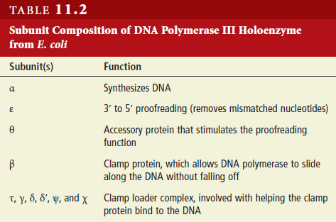 DNA replication of prokaryotes - Page 2 Dna_po18