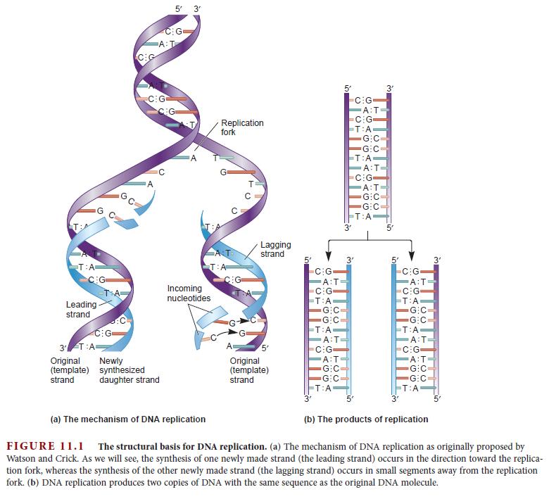 DNA replication of prokaryotes Dna_re16