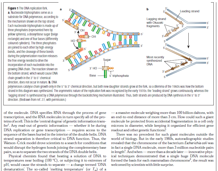 DNA replication of prokaryotes - Page 2 Dna_re18