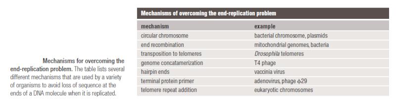 DNA replication of prokaryotes End_re11