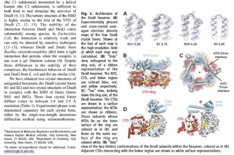DNA replication of prokaryotes Ertert10