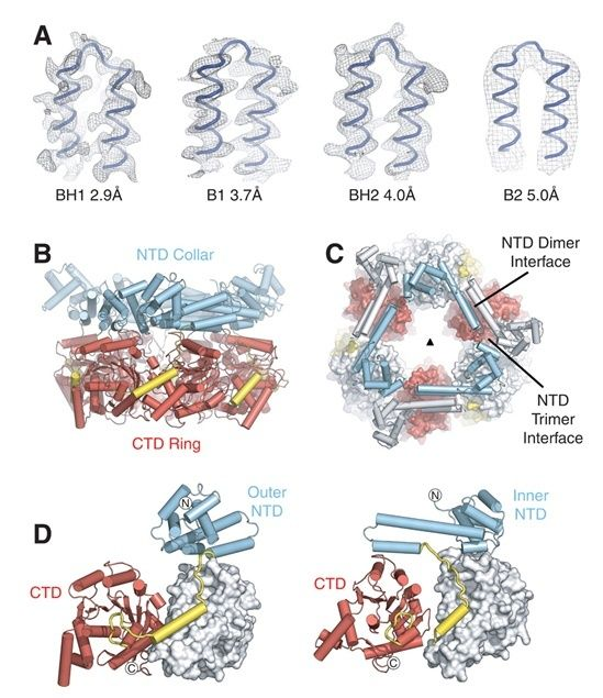 DNA replication of prokaryotes Hexame10