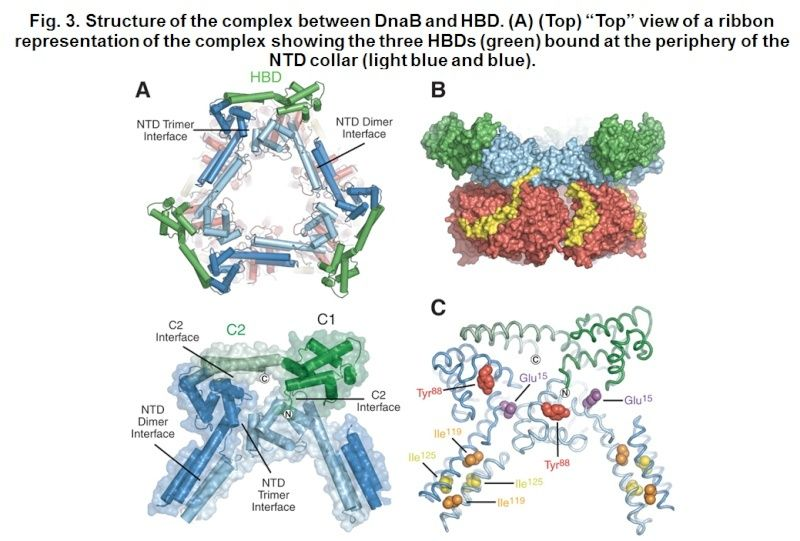 DNA replication of prokaryotes Hexame12