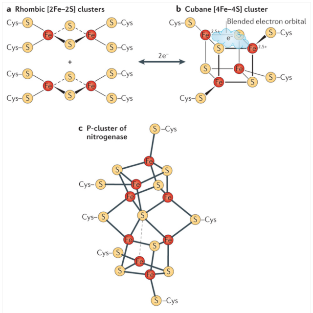 Iron-sulfur clusters: Basic building blocks for life  Ironeo11