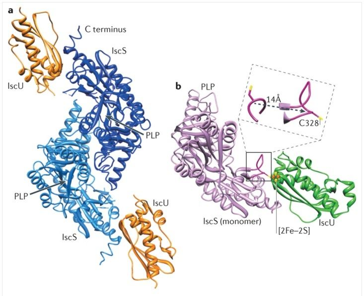 Iron-sulfur clusters: Basic building blocks for life  Iscs10
