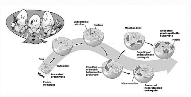 The Mitochondrion Mitoch12