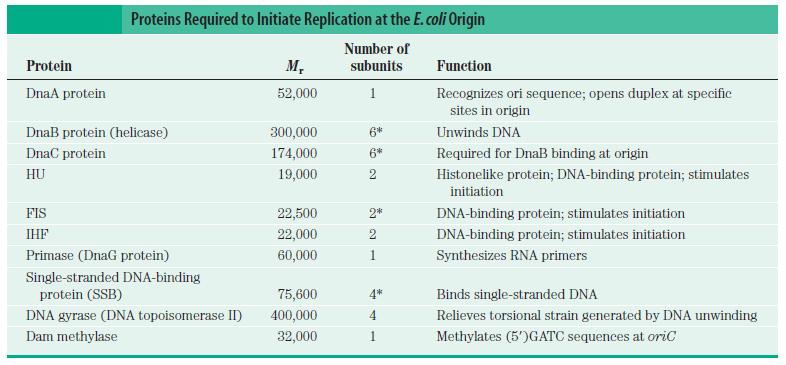 DNA replication of prokaryotes Protei10