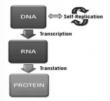 The RNA world, and the origins of life Readin18