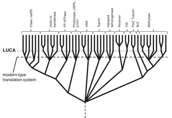 The origin of replication and translation and the RNA World Sem_ty13