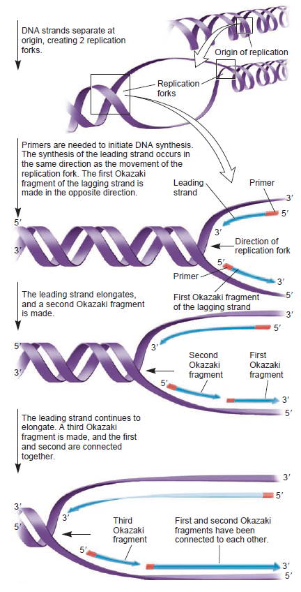 DNA replication of prokaryotes - Page 2 Unusua11