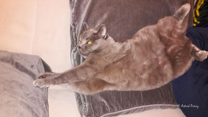 Miau... - Seite 6 Img_3212