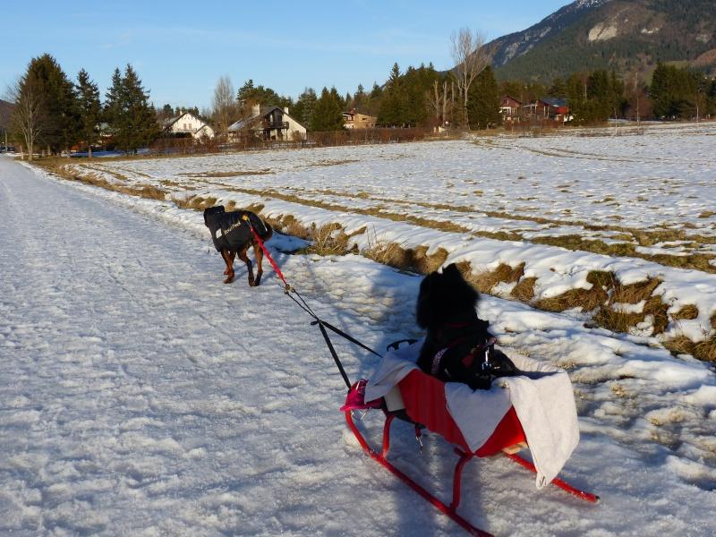Modes de transport pour petits / vieux chiens qui fatiguent vite - Page 6 P1030210