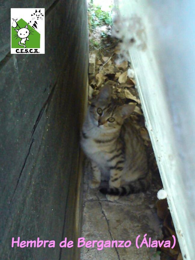 CESCA. La unión de Apa Sos Vitoria y Esperanza Felina por los gatos callejeros de Álava - Página 6 112