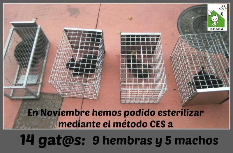CESCA. La unión de Apa Sos Vitoria y Esperanza Felina por los gatos callejeros de Álava - Página 6 Noviem11