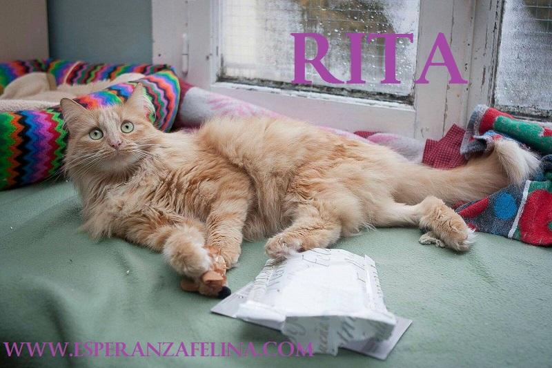 Rita, preciosa gatita rubia busca hogar. FN (13/05/2013) Álava. ¡ADOPTADA! Rita110