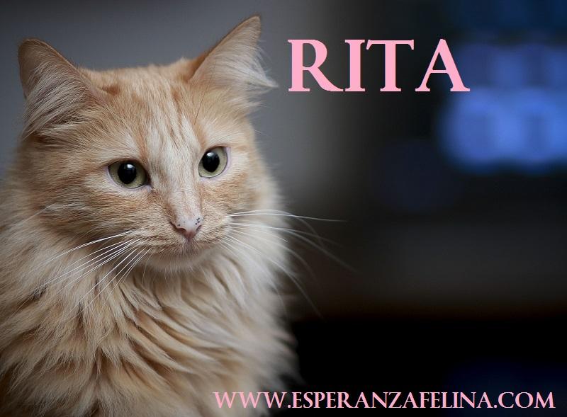 Rita, preciosa gatita rubia busca hogar. FN (13/05/2013) Álava. ¡ADOPTADA! Rita210