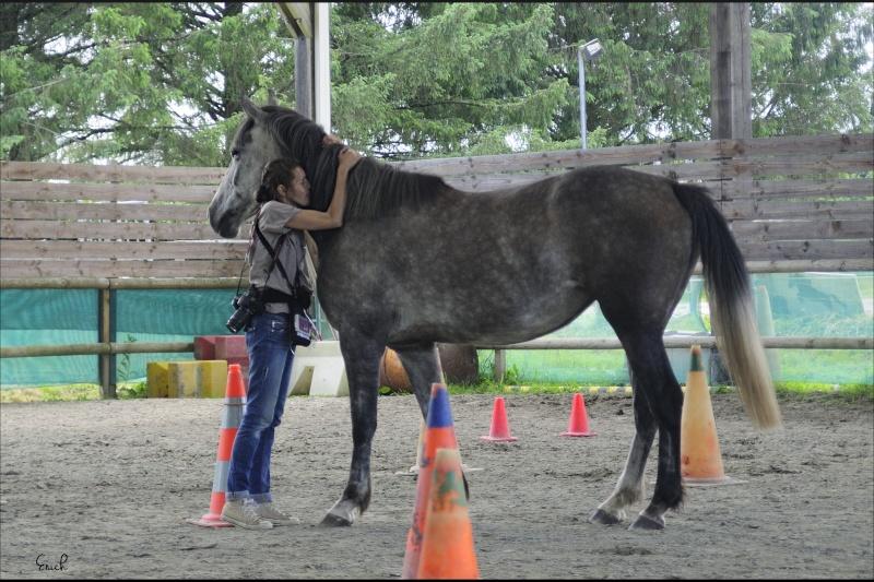 (Dpt 63)  CALYPSO, ONC, Adoptée par le centre equestre de pluvigner (Août 2014) - Page 11 _dsc0011