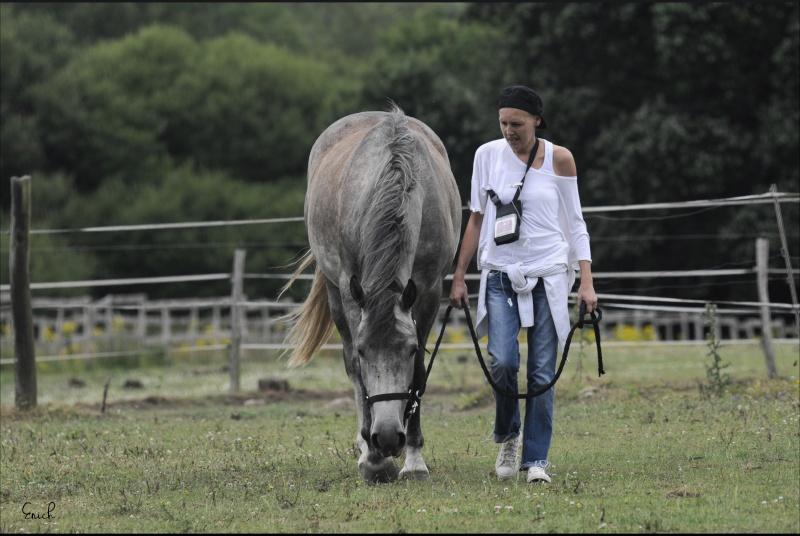 (Dpt 63)  CALYPSO, ONC, Adoptée par le centre equestre de pluvigner (Août 2014) - Page 11 _dsc1810
