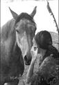 (Dpt 63)  CALYPSO, ONC, Adoptée par le centre equestre de pluvigner (Août 2014) - Page 11 _dsc0910