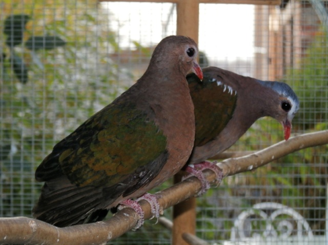 Mes oiseaux Pc270016