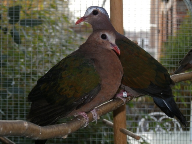 Mes oiseaux Pc270017