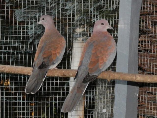 Mes oiseaux Pc270018