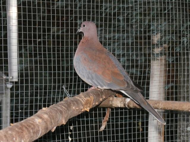 Mes oiseaux Pc270019