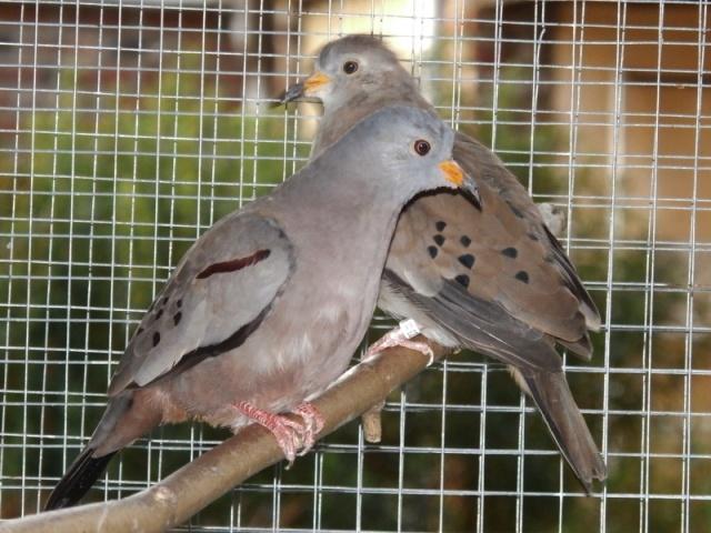 Mes oiseaux Pc270020