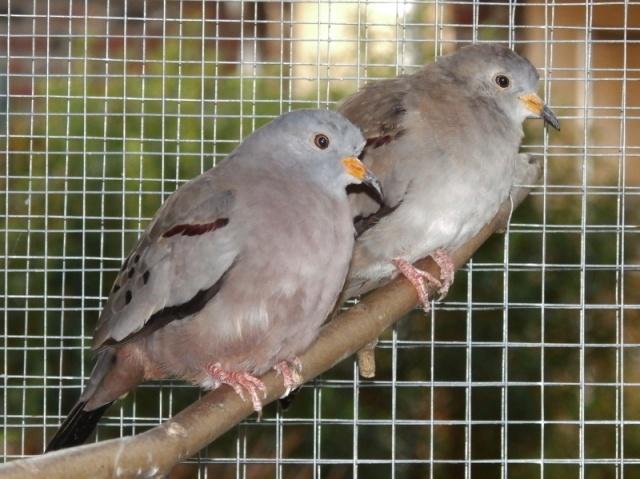 Mes oiseaux Pc270021