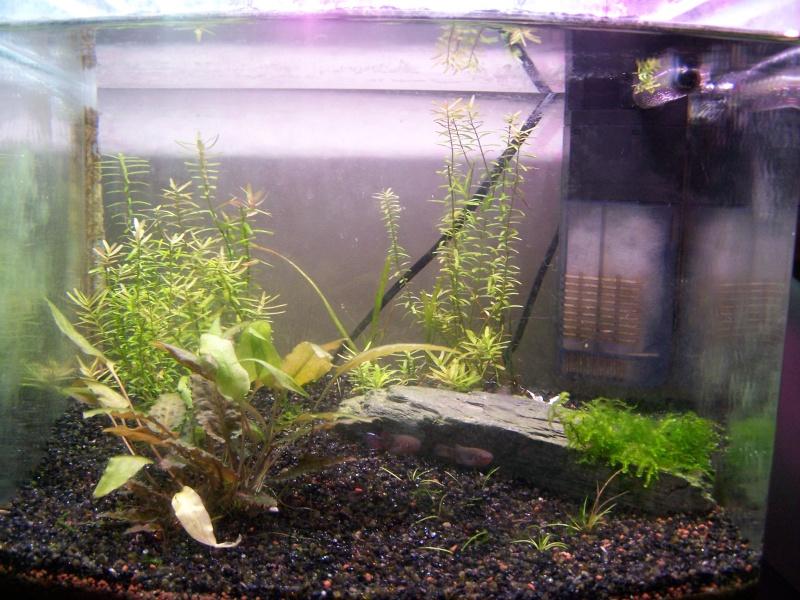 Deux petits aquariums... 100_4014
