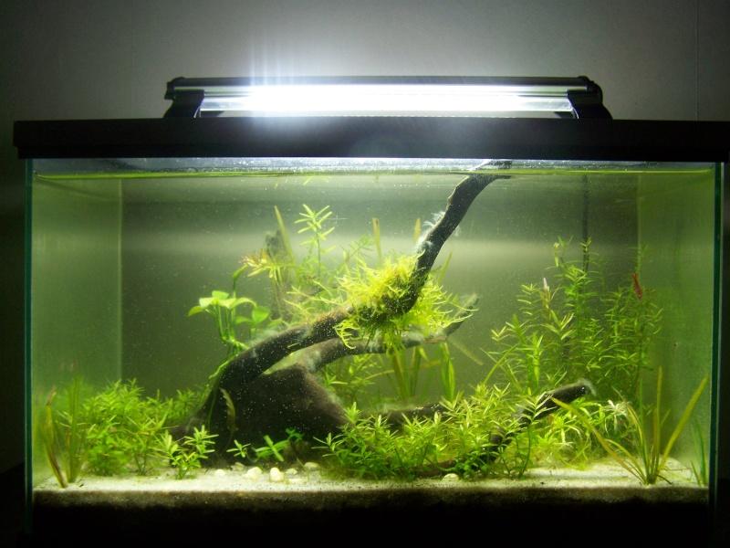 Deux petits aquariums... 100_4017