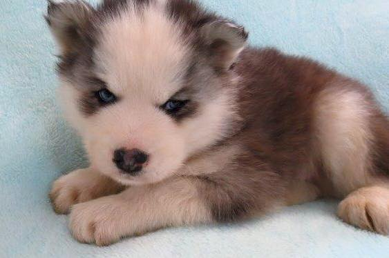 Adding a puppy to our pack this week! 12631310