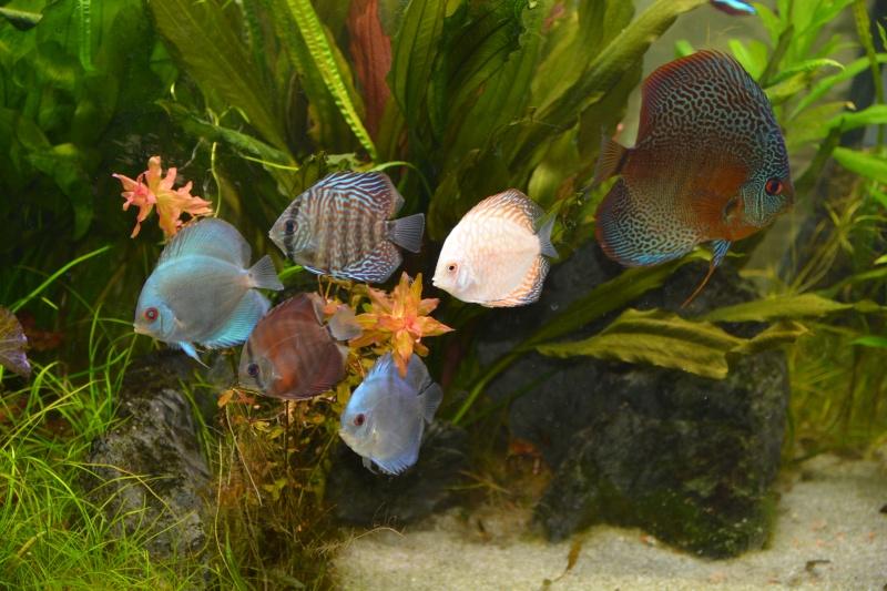 commande sur aquariumpoissons.fr Dsc_5211