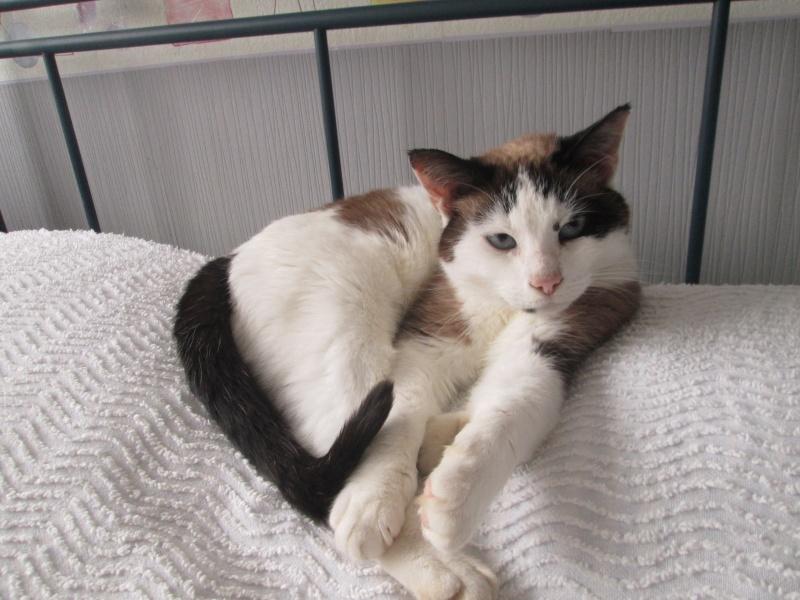 jixy - JIXY, jeune chatte croisée siamoise, née en 2014 Img_2310