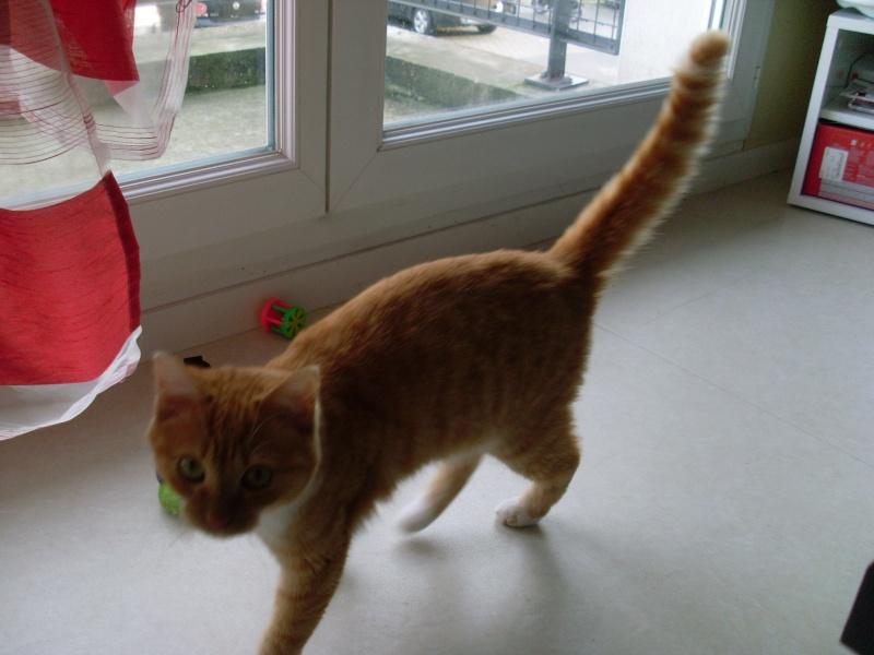 [ Trouvé] Visite post adoption Lipton (chat) à Bruz 35 Sl370211