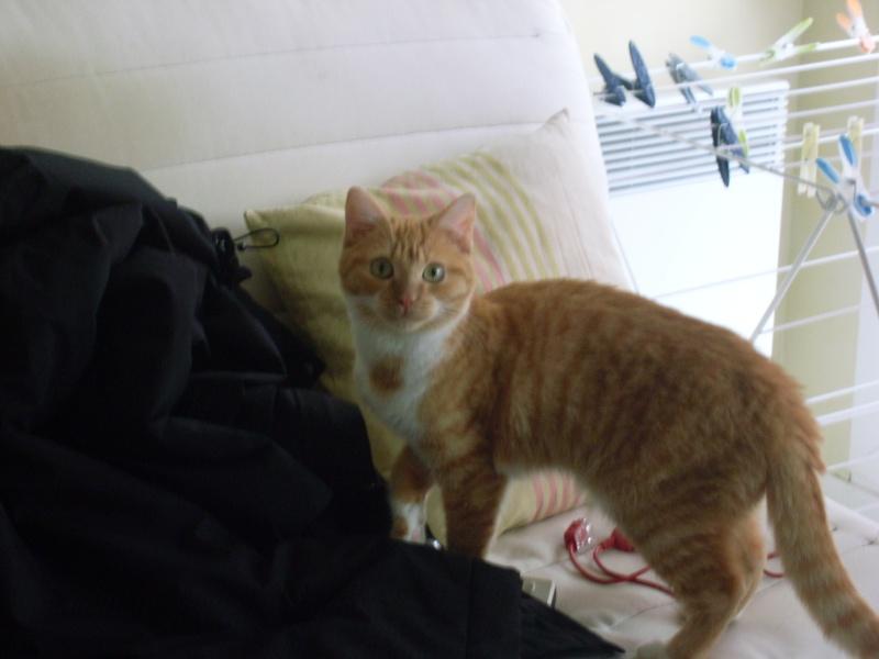 [ Trouvé] Visite post adoption Lipton (chat) à Bruz 35 Sl370212