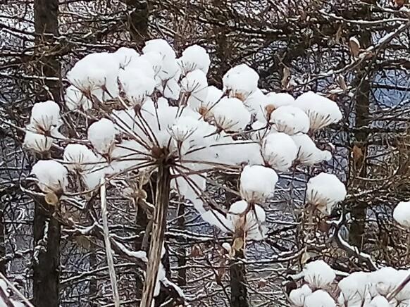Thème du mois de Janvier 2016  : La nature en hiver et en couleurs de votre choix Img_0311