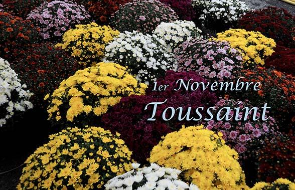 Bonjour -Bonsoir du mois de Novembre   Chrysa10